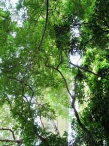 Parque Los Chorros cota Mil